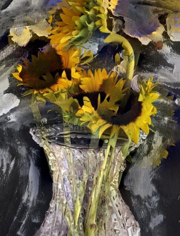abelardo morell, Flowers for Lisa #23 - Four Sunflowers