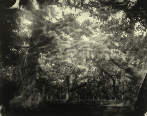 Sally Mann, Deep South, Untitled (Woven Branches), 1998