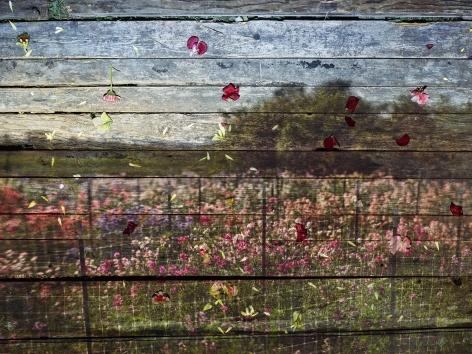 abelardo morell, flowers for lisa #49 - tent camera image on ground: floret flower farm