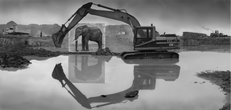 nick brandt Quarry with Elephant, 2014