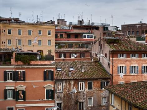 Out My Window, Birds, Piazza dei Ponziani, Rome, February, 2017