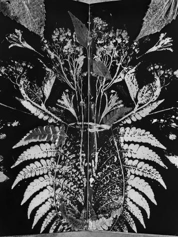 abelardo morell, Flowers for Lisa #71 - After Atkins