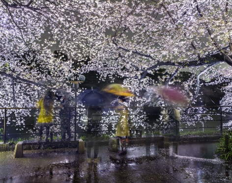 Matthew Pillsbury, Hanami #16, Chidorigafuchi, Thursday, April 3rd, 2014
