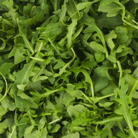 Wild Arugula Food Service Packs