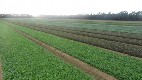 Crop rotations are an important tool for soil & plant health