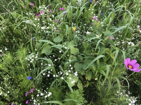 Cover crops, when flowering, add to pollinator populations and increase the diversity of beneficial insects.