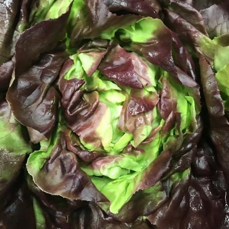Red Butter Lettuce Head