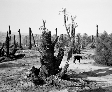 Mimi Plumb  Palm Desert, 1987  Archival pigment print  Contemporary edition of 10  15 x 18 inches