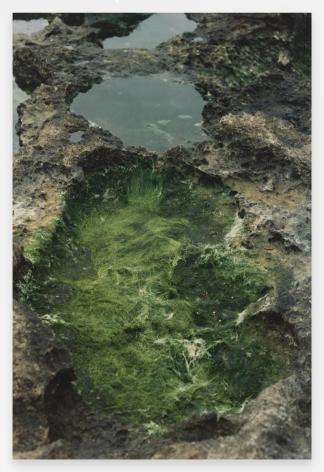 Ana Mendieta  Untitled: Silueta Series, Iowa, 1976-78 / 1991  From Silueta Works in Iowa, 1976-1978  Color photograph  20 x 16 inches (50.8 x 40.6 cm)  Edition of 20 with 4 APs