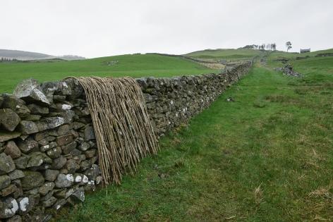 Andy Goldsworthy Ash sticks / Wall / Dumfriesshire, Scotland / 26 April 2018, 2018 Unique archival inkjet print 20.9 x 31.5 inches (53 x 80 cm) Framed: 21.13 x 32.75 x 1.5 inches (53.7 x 83.2 x 3.8 cm) (GL13342)