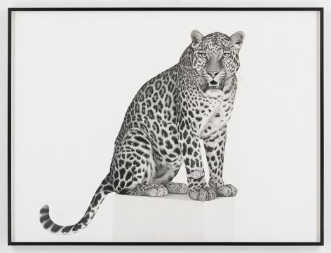 KARL HAENDEL Jaguar 2019