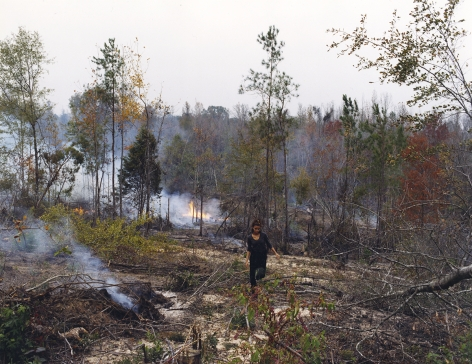 JUSTINE KURLAND Forest Fire