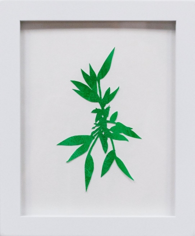 Hannah Cole  Crabgrass #5, 2018  watercolor on cut paper  Framed: 10h x 8w in 25.40h x 20.32w cm  HC_056