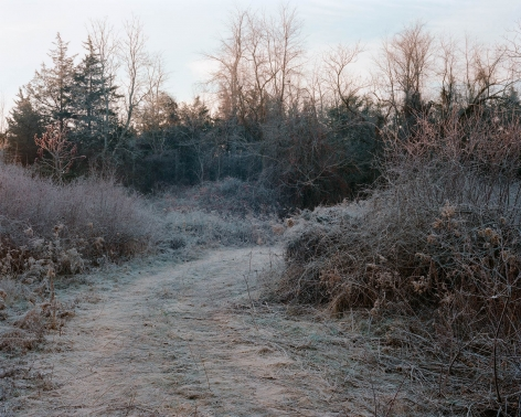 Tema Stauffer  Winter Path, Livingston, New York, 2016  Archival Pigment Print  24h x 30w in, Edition of 8  30h x 36w, Edition of 8  42h x 50.5w, Edition of   TS_010