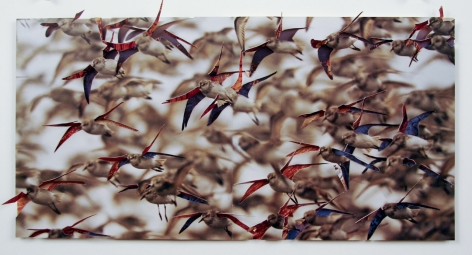 Nicholas Hall, Untitled (Birds), 2013, Dimensional Paper Cut-Out, 10h x 19.75w in, mixed media