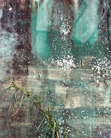 Efflorescence, 2020  Archival pigment print  32 x 40 inches  Edition of 5, concrete wall with swathes of blue, efflorescence, and a green plant in the lower left corner