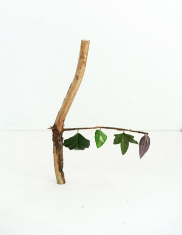 Botanicals, Four Leaves, 2020  Archival Pigment Print  50.8h x 40.64w cm  Edition of 5  30h x 24w in  76.2 h x 50.8w cm  Edition of 3, Still life with vertical stick and a horizontal brach, on it hangs four different varieties of green leaves