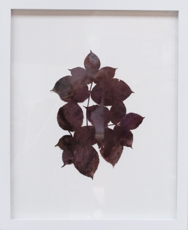 Hannah Cole  Purple Serrated Weed, 2018  watercolor on cut paper  Framed: 20h x 16w in 50.80h x 40.64w cm  HC_047