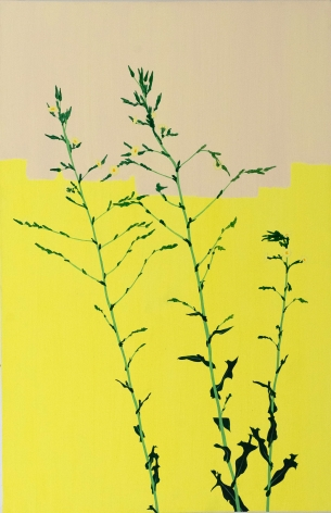 Hannah Cole  Life After a Hard Winter (Yellow on Yellow Weed), 2017  Acrylic on canvas  37h x 24w in 93.98h x 60.96w cm  HC_031 Photorealistic painting