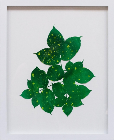 Hannah Cole  Yellow Spotted Weeds, 2018  watercolor on cut paper  Framed: 20h x 16w in 50.80h x 40.64w cm  HC_065
