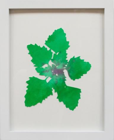 Hannah Cole  Lamb's Quarters, 2018  watercolor on cut paper  Framed: 14h x 11w in 35.56h x 27.94w cm  HC_035