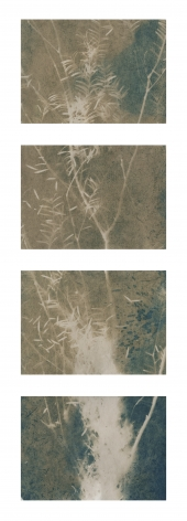 "Dawn Roe  Si's Branch (Rain) from the series, ""Conditions for an Unfinished Work of Mourning: Wretched Yew"", 2019  Toned Cyanotype on paper  Set of 4, 5 x 7 inches each (paper size), set of 4 vertical toned cyanotypes of a yew tree branch"
