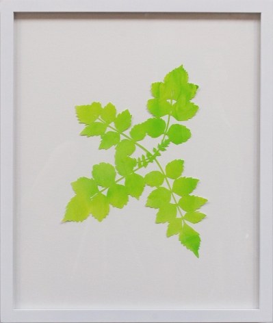 Hannah Cole  Lacy Yellow Weed, 2018  watercolor on cut paper  Framed: 24h x 20w in 60.96h x 50.80w cm  HC_059