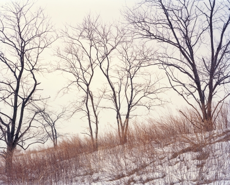 orth Mound Trees (after SM), 2019, Photograph of trees in the snow on the North mound, Freshkills, NYC