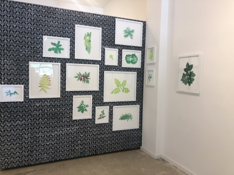 Growth, 2019  Two-sided wall installation with hand-stenciled wall (right wall)  32 framed watercolors on cut paper
