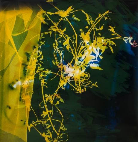 Bryan Graf  Levitating Garden 1, 2018  photogram  30h x 30 1/2w in