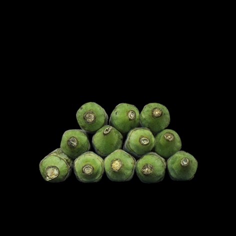 Gesche Wüerfel  Okra, (Mordecai Plantation), 2016  Archival Pigment Print  8h x 8w in 20.32h x 20.32w cm  Edition of 5, Photograph, Stack of green okra Black background