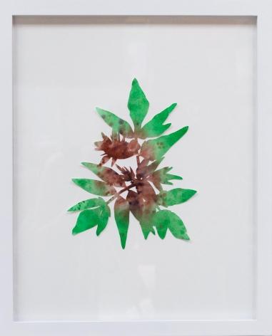 Hannah Cole  Sumac, 2018  watercolor on cut paper  Framed: 20h x 16w in 50.80h x 40.64w cm  HC_058