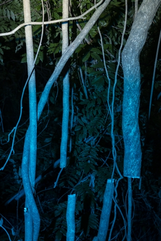 Untitled #8, 2020  Archival pigment print  24 x 16 inches  Edition of 5, night time image of tree trunk, vertical orientation, blue lights