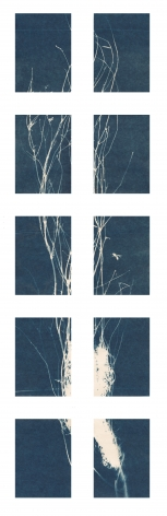 "Dawn Roe  Si's Branch (Wasp #1) from the series, ""Conditions for an Unfinished Work of Mourning: Wretched Yew"", 2019  Toned Cyanotype on paper  Set of 10, 7 x 5 inches each (paper size), set of 10 cyanotypes of Yew tree branches, deep blue and white"