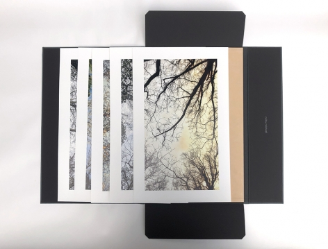 From the Forest Floor Portfolio of 5 Archival Pigment Prints 12.5 x 20 inches each, paper size 9.5 x 17 inches each, image size Edition of 3 Each print is signed and stamped, verso Collophon Handmade portfolio case by Karen Hardy $1,750