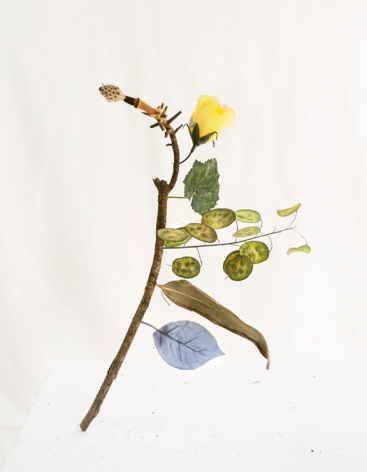 James Henkel, Botanical, Blue Leaf, 2020  Archival Pigment Print  20h x 16w in  Edition of 5  30h x 24w in  Edition of 3, still life of a curved branch with dried leaves of various plants, a silk blue leaf and a silk yellow rose