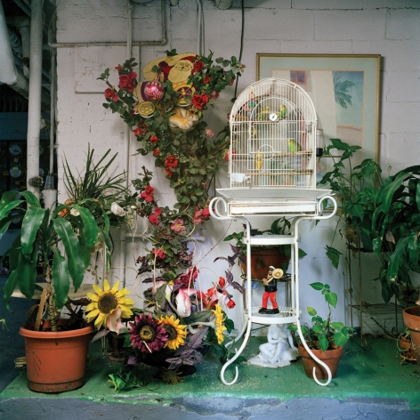 Untitled #57 (cage), 2013  from the series Basement Sanctuaries Archival pigment print  16 x 16 inches  Edition of 5, interior of a basement with plastic plants, potted plants, a white bird cage on a stand and green floor