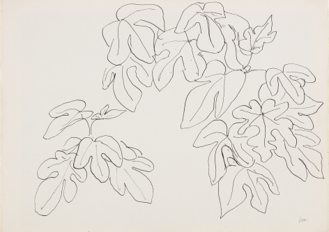 Henri Matisse Leaves, 1941 Ink on paper recto and verso 11 x 14 3/4 inches