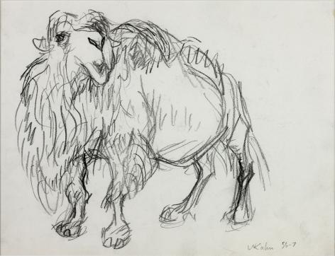 Wolf Kahn, Camel, 1956-57    Pencil 9 x 11 inches