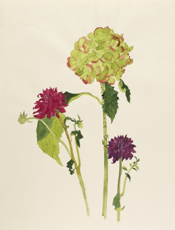 Pamela Sztybel, Hydrangea with Two Dahlias, 2017, Watercolor on paper 25 1/2 x 19 1/2 inches