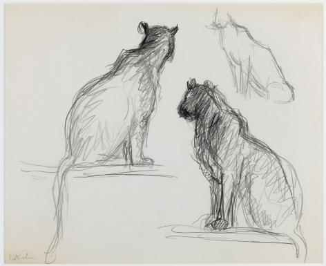 wolf Kahn, Pumas, 1948    Pencil 14 x 17 inches