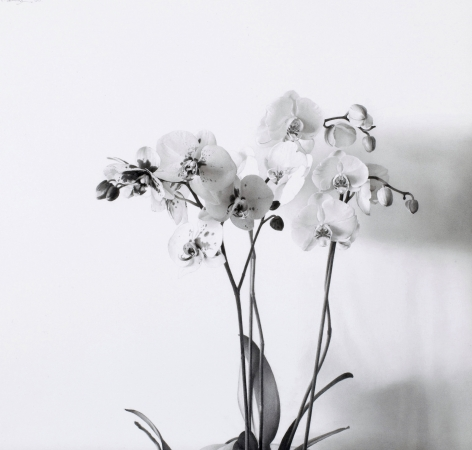 Pere Santilari Perarnau    Flowers I (Orchids I), 2010    Graphite pencil on Scholler cardboard 16 3/8 × 17¼ inches