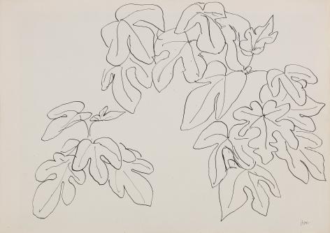 Henri Matisse, Leaves (RECTO), 1941