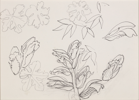 Henri Matisse, Leaves (VERSO),1941