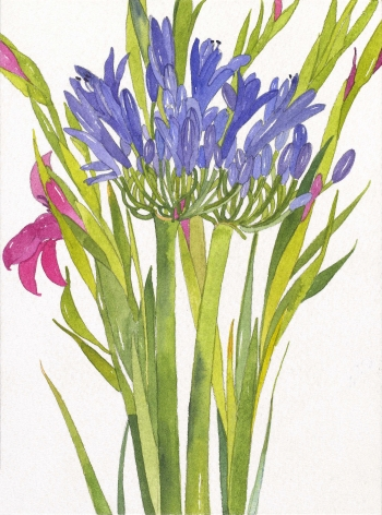 Pamela Sztybel, Agapanthus, 2016, Watercolor on paper 7 3/4 x 5 3/4 inches