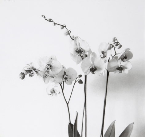 Josep Santilari Perarnau    Orchids, 2010    Graphite pencil on Scholler cardboard 16 3/8 × 17 3/8 inches