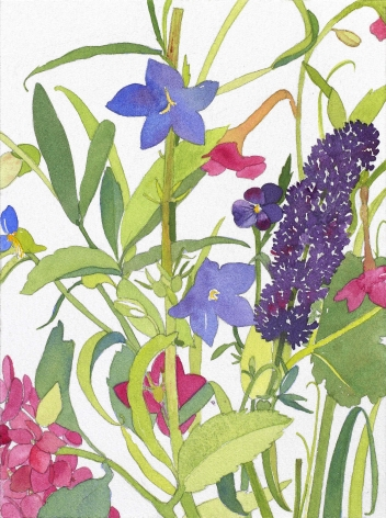 Pamela Sztybel, Buddleia, Nicotiana, 2016, Watercolor on paper 7 3/4 x 5 3/4 inches