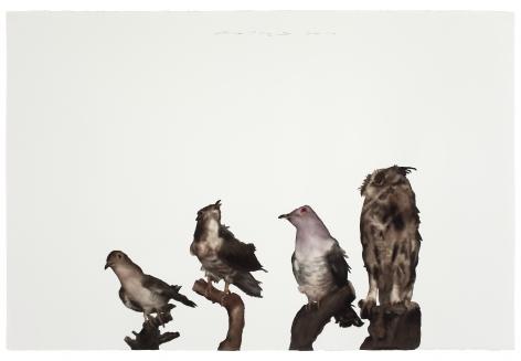 Bird No .2 鸟2, 2011