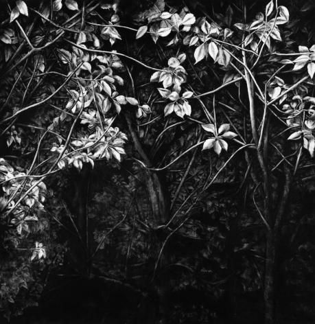 A Moonlit Night 月夜