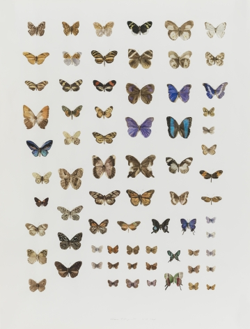 Guo Hongwei 郭鸿蔚 (b. 1982), Insect No. 11 虫11, 2014